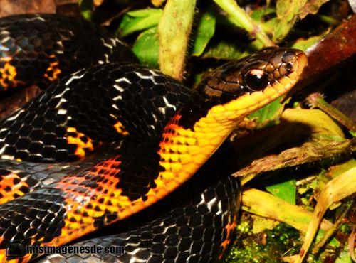 imagenes de serpientes