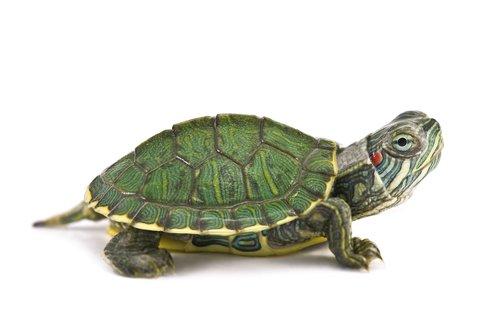imagenes de tortugas
