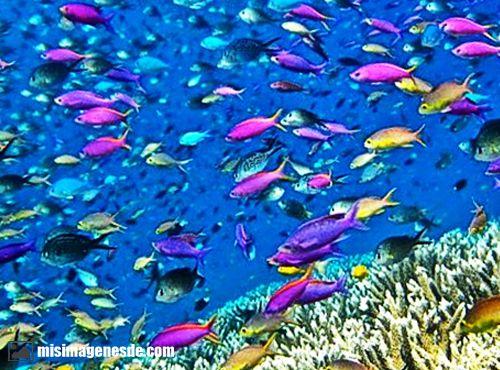 imagenes del ecosistema