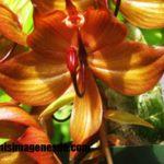 Imágenes de orquídeas raras