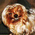 Imágenes de perros feos