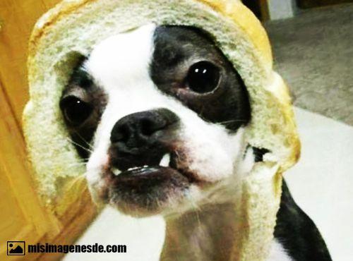 perros feos