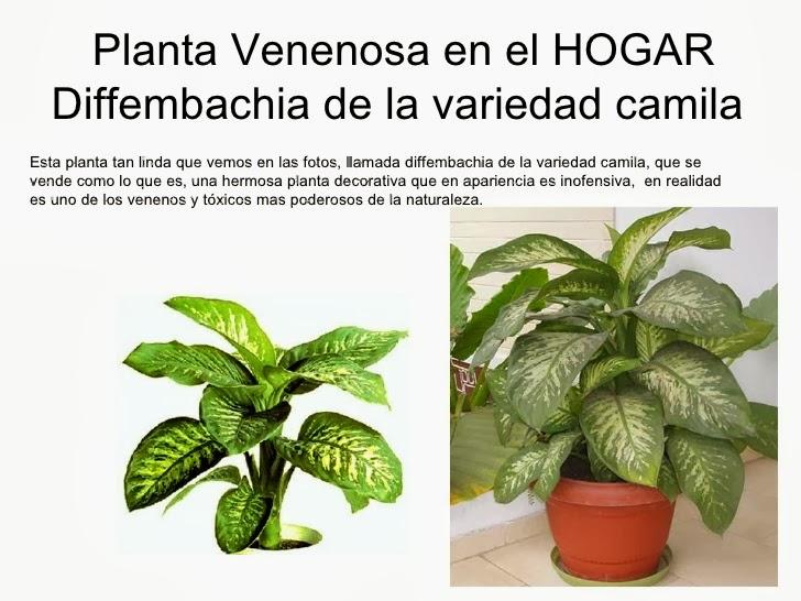 plantas venenosas