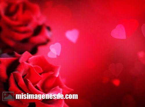 rosas de amor