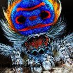 Imágenes de tipos de arañas