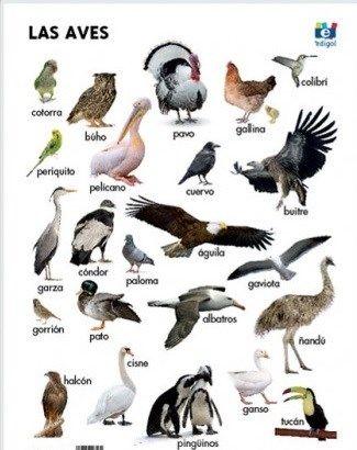 tipos de aves