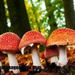 Imágenes de tipos de hongos