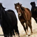 Imágenes de caballos