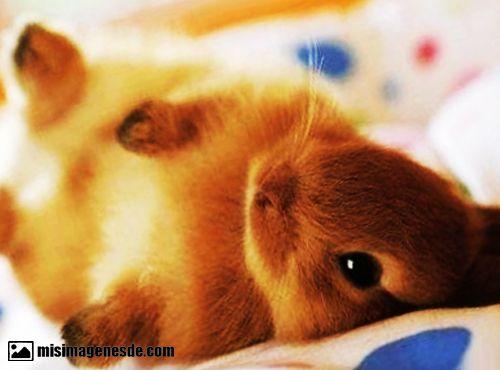 imagenes de conejitos