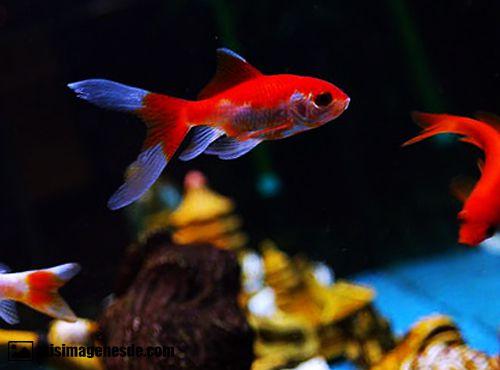 imagenes de peces