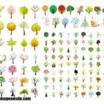 Imágenes de nombres de flores