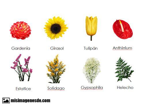 Imagenes De Nombres De Flores Imagenes