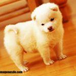 Imágenes de perros pequeños