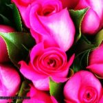 Imágenes de fotos de rosas