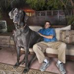 Imágenes de perros grandes