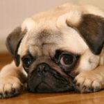 Imágenes de perros de raza
