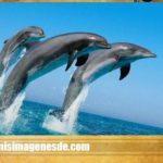 Imágenes de animales en peligro de extincion