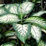 imagenes de plantas