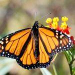 Imágenes de mariposas
