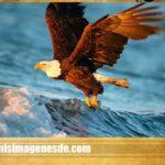Imágenes de águilas