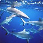 Imágenes de tiburones