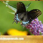Hermosas imágenes para compartir