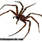 Imágenes de arañas