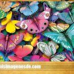 Fotos de mariposas hermosas