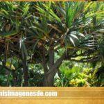 Imágenes de plantas