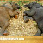 Imágenes de elefantes lindos