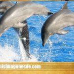 Imágenes de delfines en el agua