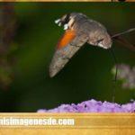 Imágenes de insectos raros