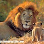 Imágenes de animales salvajes de africa