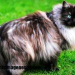 Imágenes de fotos de gatos