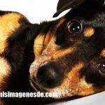 Imágenes de fotos de perros