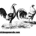 Imágenes de gallos de pelea