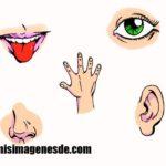 Imágenes de los 5 sentidos