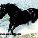 Imágenes de caballos finos