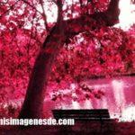 Imágenes de color rosa