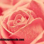 Imágenes de colores rosas