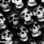 Imágenes de cráneos