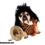 Imágenes de disfraces para perros