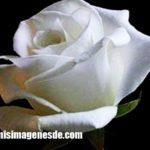 Imágenes de flores blancas