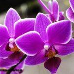 Imágenes de fotos de orquídeas