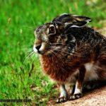 Imágenes de conejos