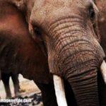 Imágenes de elefantes
