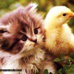 Imágenes de gatitos tiernos