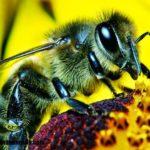 Imágenes de insectos