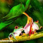 Imágenes de ranas