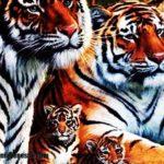 Imágenes de tigres